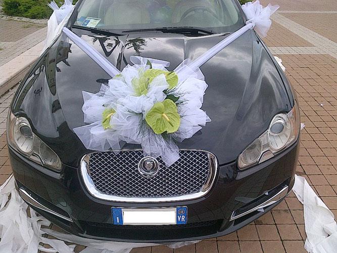 Jaguar_Princ.jpg